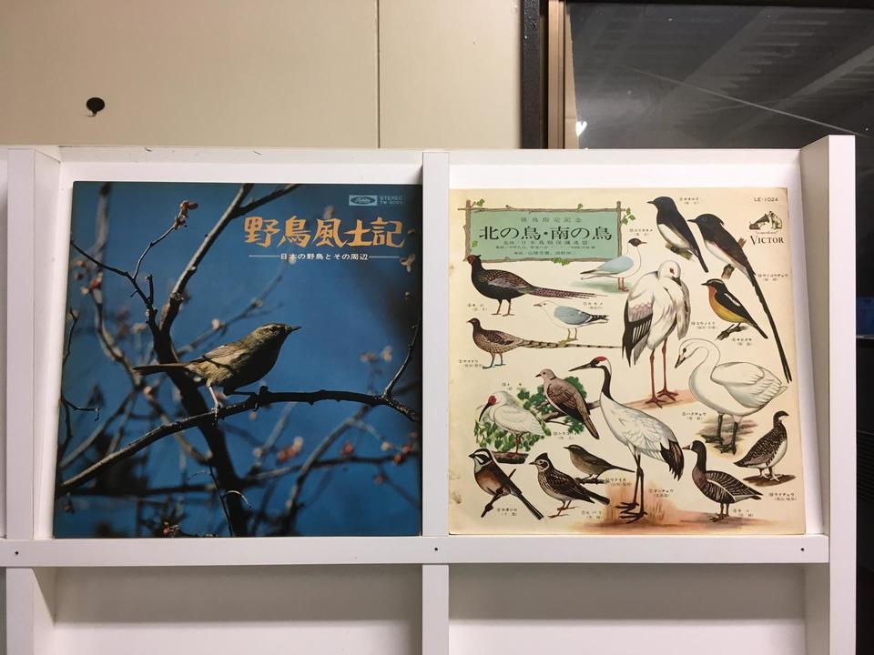 野鳥5枚セット  画像